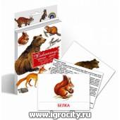 """Дидактические карточки """"Животные наших лесов"""", Маленький гений"""