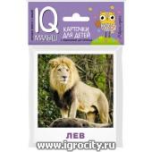 """Карточки для детей """"IQ малыш. Животные жарких стран"""" Айрис-Пресс, арт.25764"""
