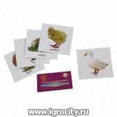 """Карточки для развития ребенка """"Домашние птицы.Мамы и дети"""" Ракета"""