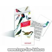 """Дидактические карточки """"Городские птицы"""", Маленький гений"""