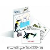 """Дидактические карточки """"Животные Арктики и Антарктики"""", Маленький гений"""