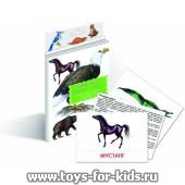 """Дидактические карточки """"Животные Северной Америки"""", Маленький гений"""