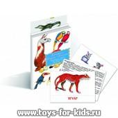 """Дидактические карточки """"Животные Южной Америки"""", Маленький гений"""